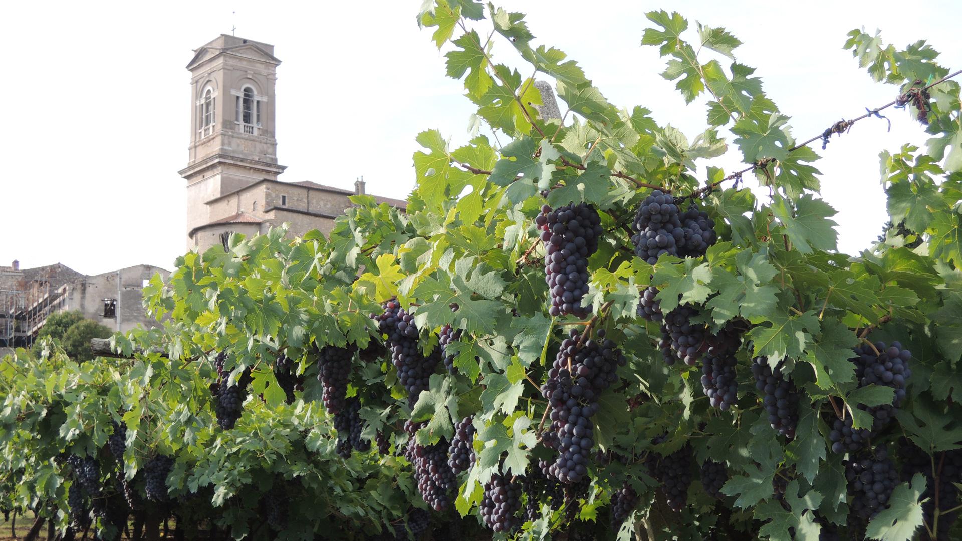 Een wijngaard in Valpolicella