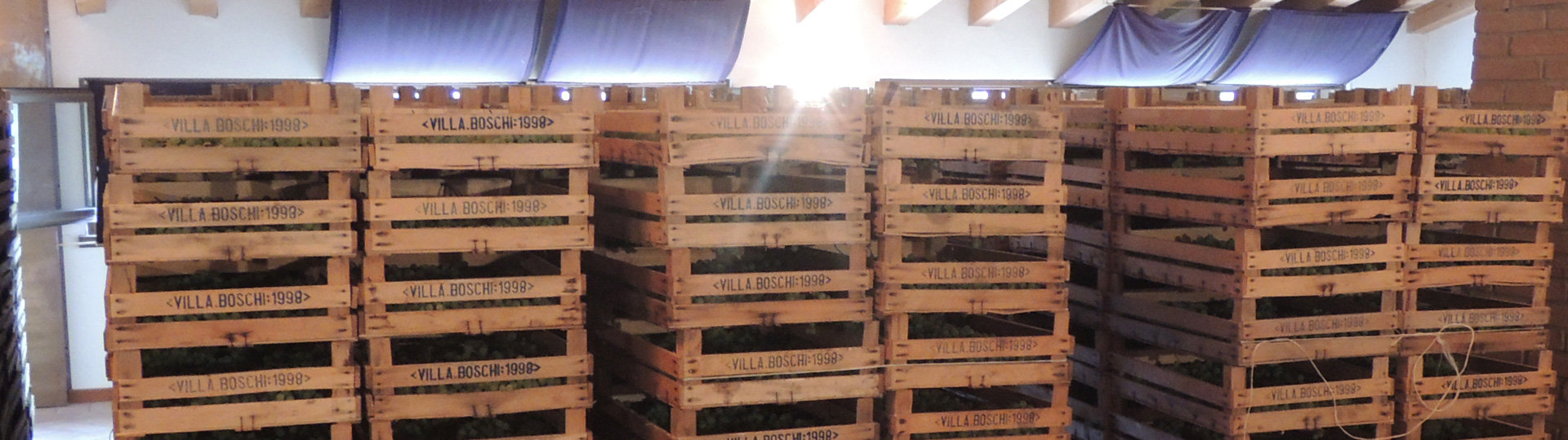 Gedroogde druiven voor de Amarone