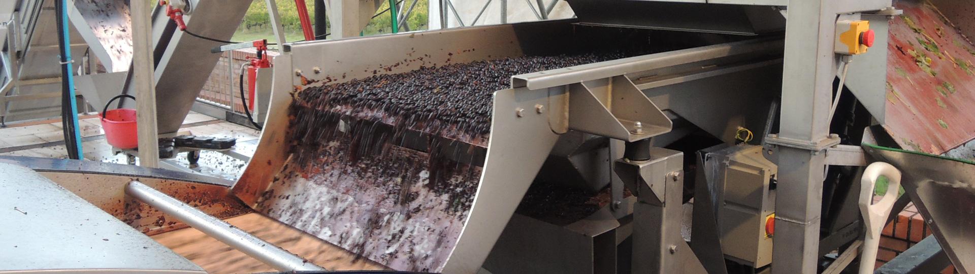 Verwerking van de druiven voor de wijn